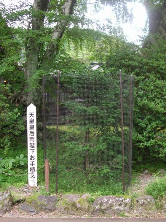 tamozawa06.jpg